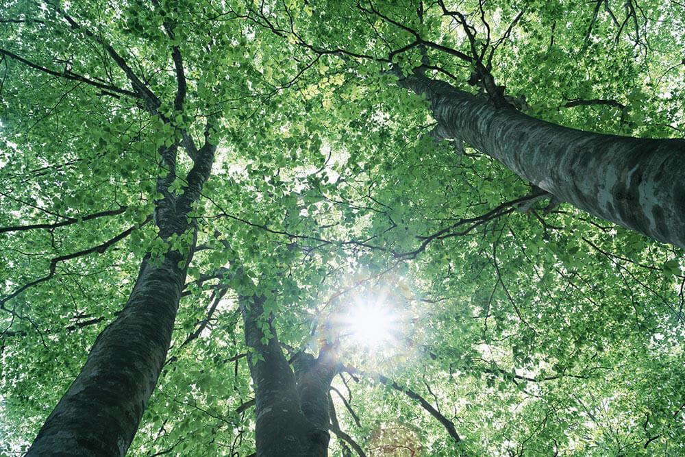駿河屋・ナチュラルショップ「空まめの木」